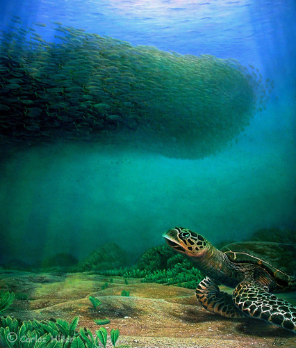 Turtle painting fine art